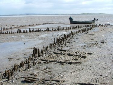River Fergus wooden fish traps AD1400-1430. Photo courtesy of Dr Aidan O'Sullivan of UCD