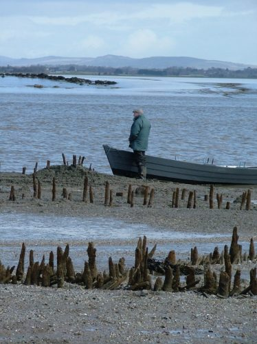 River Fergus wooden fish traps. AD1400-1430. Clarecastle fisherman, Flan Considine in view. Photo courtesy Dr Aidan O'Sullivan of UCD