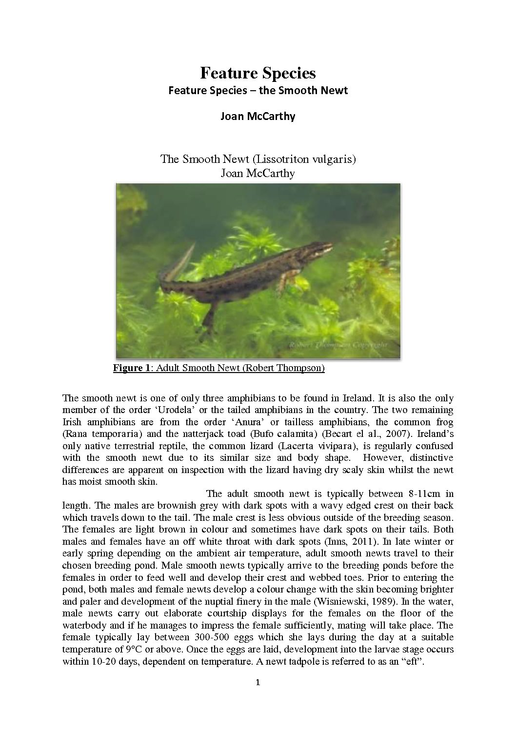 The Smooth Newt by Joan McCarthy