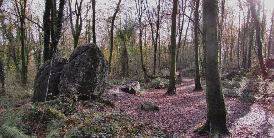 Ballybeg Woods in Autumn