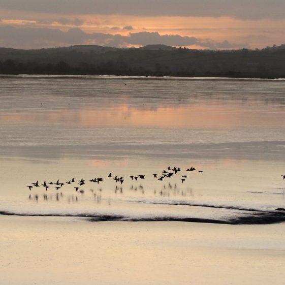 Bird flight at sunset in Islamdavanna  | John Power