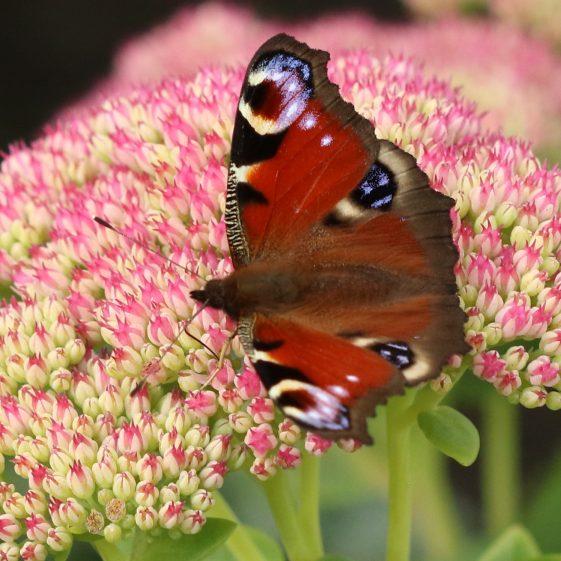 A small tortoiseshell butterfly | John Power