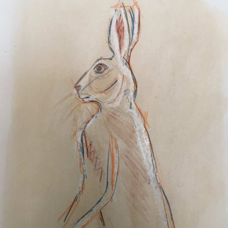 May Eve Hare  | Breda O'Hanlon