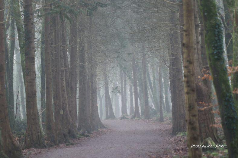 Ballybeg woods in the fog    John Power