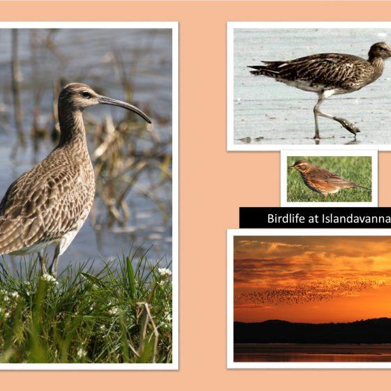 Birdlife at Islandavanna   CBHWG Archives