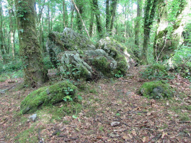 Erratic boulders in Ballybeg Woods   Eric Shaw