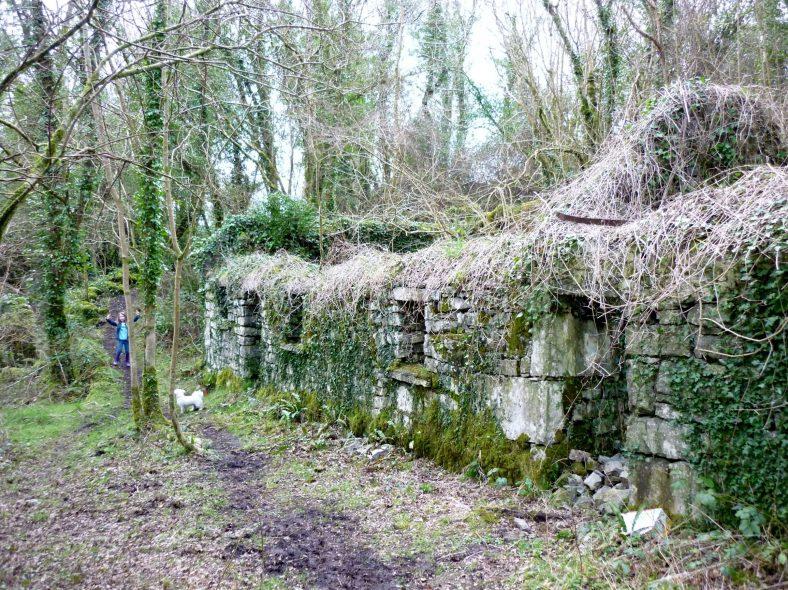 Katie Scanlan's cottage   Eric Shaw
